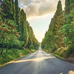 Bolgheri Tuscany
