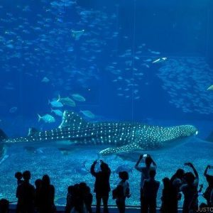 Ocean-Expo-Park-15-1010824-600x400