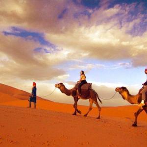 travel-photography-career-sahara-morocco-camels-hillary-fox-800x600