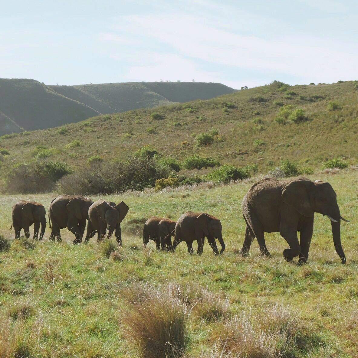 African Safari 6
