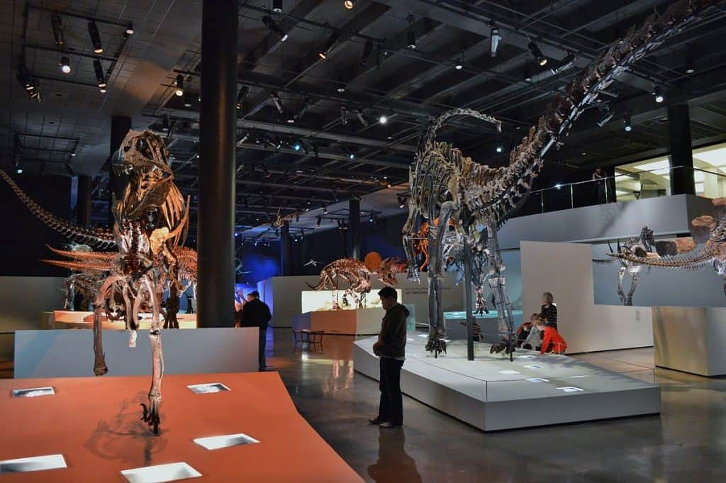 1. Museum of Natural Science