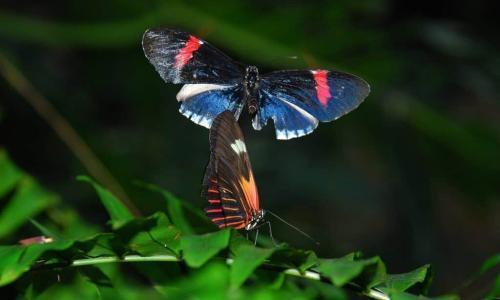 Cockrell Butterfly Center 1